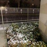 昨日は雪でしたね